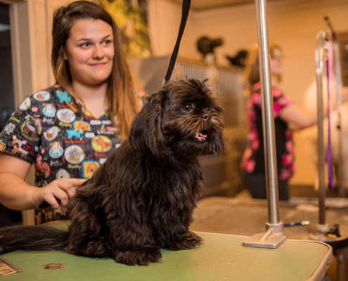 Bed and biscuit pet spa the ultimate pet spa for dogs cats for A bath and a biscuit grooming salon